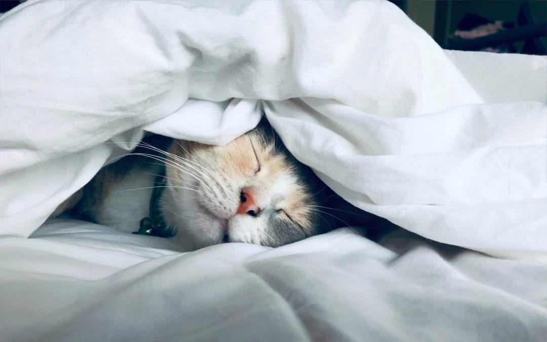 Make Sleep Your Superpower